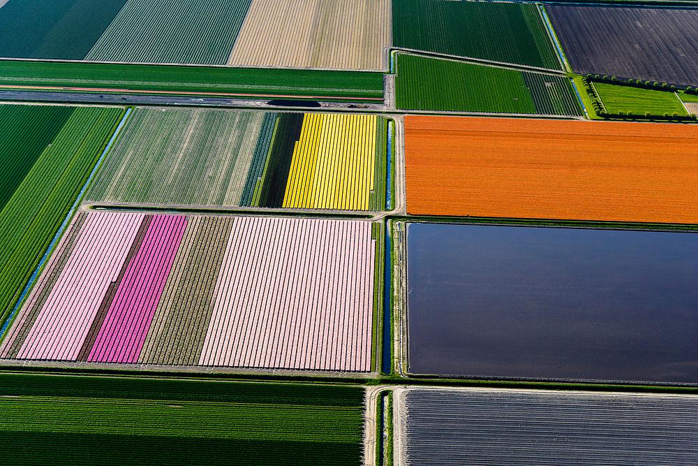 Nederland, Noord-Holland, Gemeente Hollands Kroon, 07-05-2018; Mondriaan in de polder, bloembollenvelden in de Anna Paulownapolder, omgeving Breezand, kop van Noord-Holland.<br /> Mondriaan in the polder, flower bulb fields in the Anna Paulownapolder, Breezand area, head of North Holland.<br /> <br /> luchtfoto (toeslag op standaard tarieven);<br /> aerial photo (additional fee required);<br /> copyright foto/photo Siebe Swart