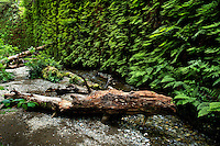 090-P83356<br /> <br /> Prairie Creek Redwoods State Park<br /> ©2014, California State Parks<br /> Photo by Brian Baer