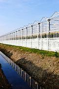 Tuinbouw, kassen in het Westland  -  Horticulture, greenhouses in het Westland, area near The Hague, Netherlands