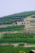 vineyard vorburg grand cru rouffach alsace france