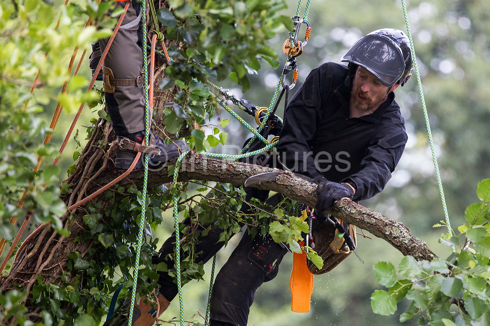 A tree surgeon working with the National Eviction Team cuts an ancient alder tree which environmental activists from HS2 Rebellion had been seeking to protect from works for the HS2 high-speed rail link on 24th July 2020 in Denham, United Kingdom. A large security operation involving officers from the Metropolitan Police, Thames Valley Police, City of London Police and Hampshire Police as well as the National Eviction Team ensured the removal of the tree by HS2 despite the protests by activists.