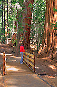 Hiker on the Trail of 100 Giants, Giant Sequoia National Monument, California
