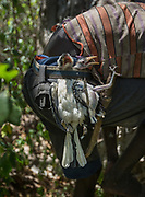 Isak catches a bird and its chicks directly in their nest. At the Hadza camp of Dedauko.