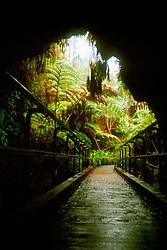 Thurston Lava Tube (Nahuku), Hawaii, USA Volcanoes National Park, Kilauea, Big Island, Hawaii, USA