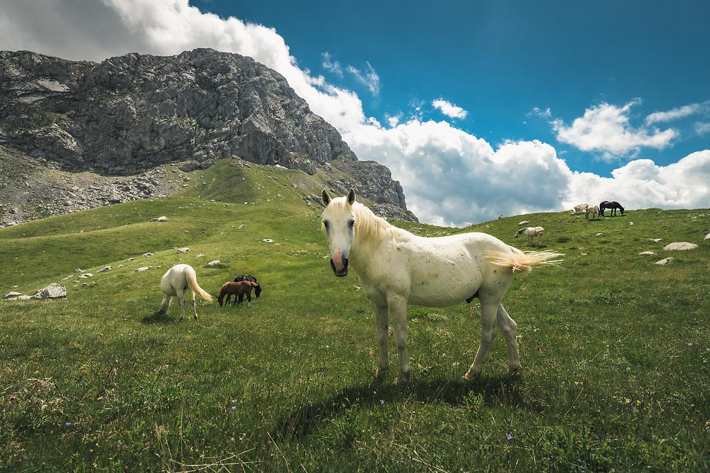 Horses under mount Giona, Greece