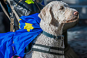 Dogs lend their support again - The People's Vote March For The Future demanding a Vote on any Brexit deal. The protest assembled on Park Lane and then marched to Parliament Square for speeches.