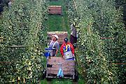 Nederland, Leuth, 18-9-2006..Fruitoogst. De oogst van peren. Veel tuinders zijn afhankelijk van seizoenswerkers, vaak Polen, om hun oogst op tijd binnen te halen. De afhandeling van vergunningen zijn versneld, om de tuinbouw te behoeden voor schade...Foto: Flip Franssen/Hollandse Hoogte