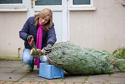 Buying a Christmas tree and sawing off the end of the trunk so it lasts longer.