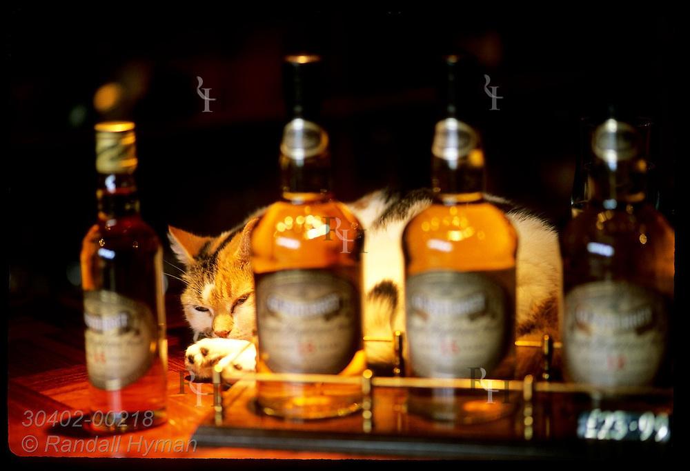 Bottles of Glenturret sit in gift shop as Amber the official distillery cat sleeps; Crieff. Scotland