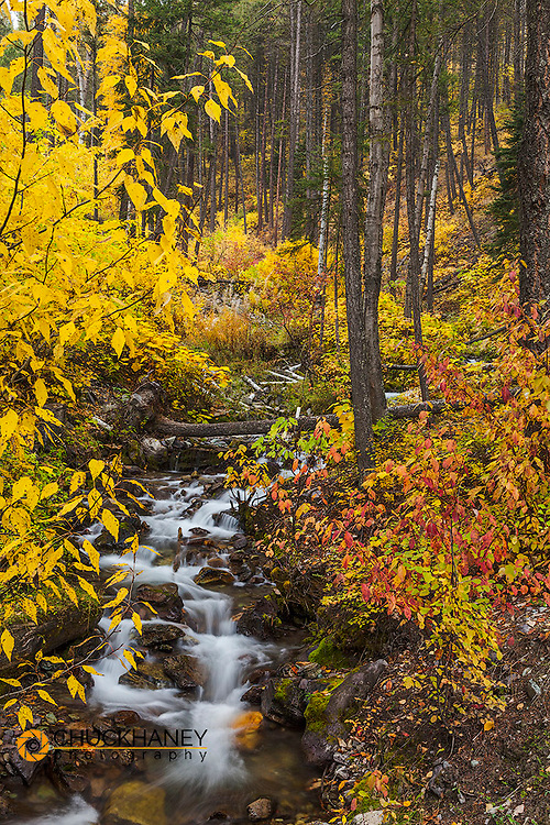 Hellroaring Creek decked out in autumn color near Whitefish, Montana, USA