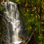 Big Basin Redwoods State Park, California
