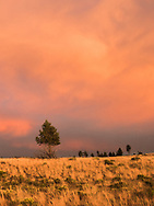 This scene was captured in the central Oregon desert in a region called Stookey Flat. I was camped here in July of 2014 with grand plans to photograph lightning - an opportunity that never materialized. As sometimes happens, however, I was blessed with a different photo opportunity. At the time there were a dozen forest fires burning across the state which filled the air with a smoky haze. The setting sun shining through this haze, combined with an approaching storm front, cast the surroundings into a beautiful deep fiery light. A photo can be worth a thousand words, but in this instance it falls short because it can't let the viewer hear the song dogs (coyotes) which were performing their quixotic evening mix of howling yips and chortles while the sky was burning.