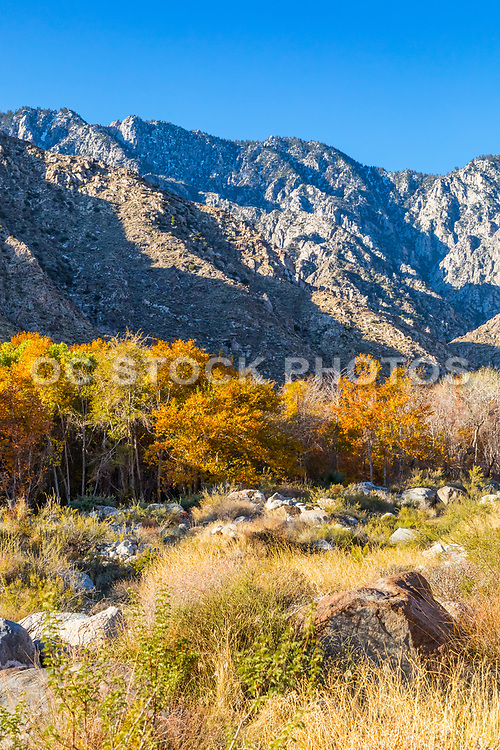 Indian Canyons Palm Springs Fall Landscape