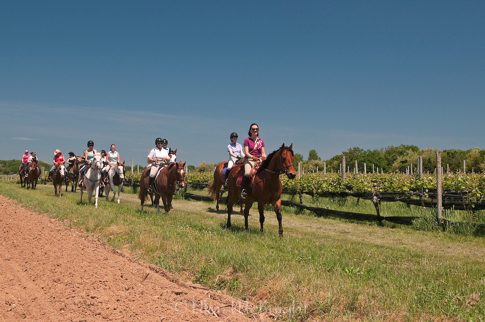 Old Field Farm 10th Annual Spring Vineyard Ride, 2013