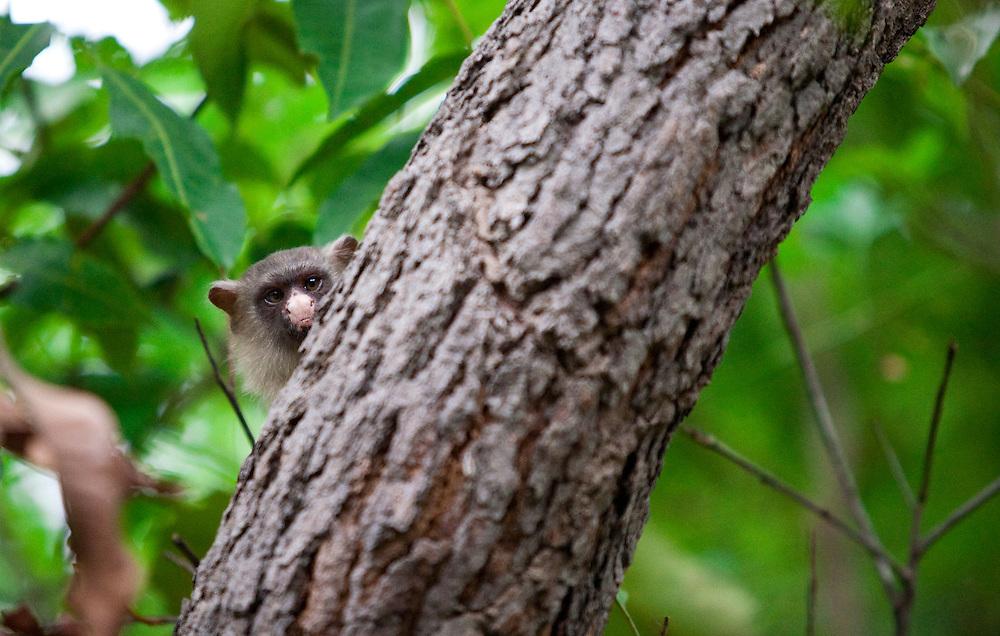 Cuiaba_MT, Brasil...Parque Mae Bonifacea em Cuiaba, Mato Grosso...Mae Bonifacia Park in Cuiaba, Mato Grosso...Foto: JOAO MARCOS ROSA / NITRO