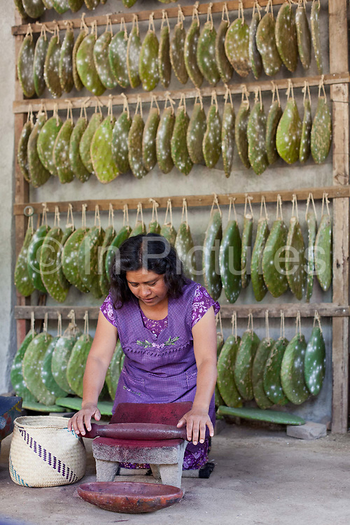A female weaver extracts the Cochineal from cacti. Oaxaca in southern Mexico is known for its artisan communities, with each valley having a different specialism - weaving, pottery, wood carving.