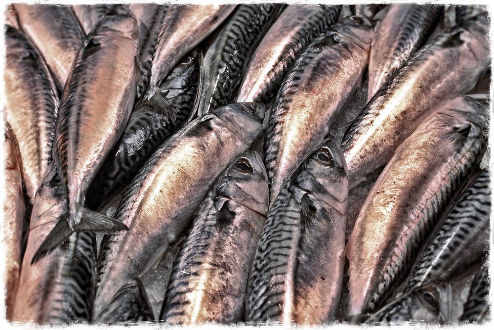 Fish for sale in Rialto fish market, Venice, Italy.