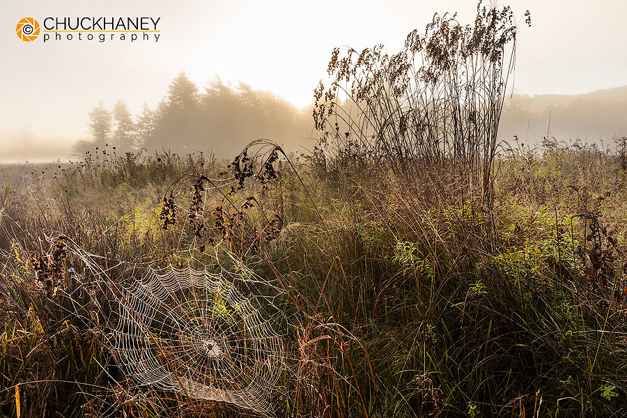 Spiders web in fog at sunrise in wetlands of Canaan Valley State Park, West Virginia, USA