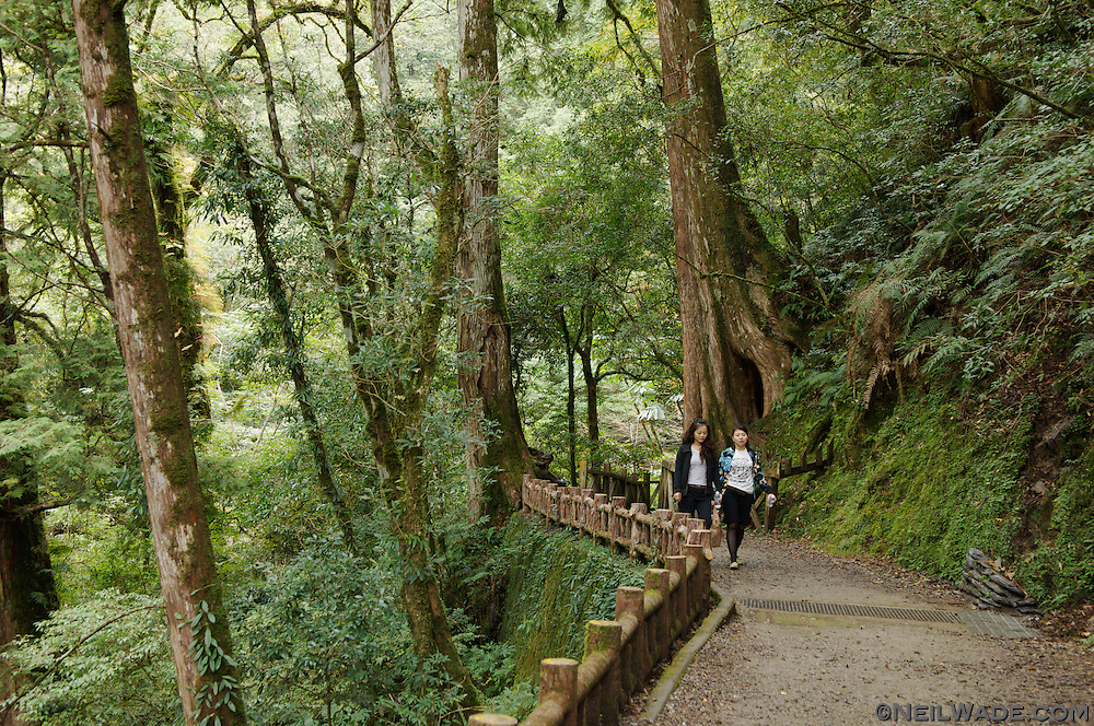 Lala Shan, Taiwan is know for its pristine forest and ancient (+2,000 years old) trees.