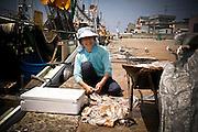AOMORI KEN, JAPAN -  - Squid Fishing - a woman wash the squid on the port. After, she will make them dry. August 2005 ***[FR]*** Femme nettoyant les calamar avant de les faire secher.