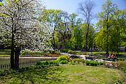 Wiosna na krakowskich Plantach, Polska<br /> Spring in the Cracow Planty, Poland