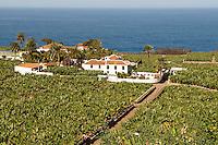 Espagne. Iles Canaries. Tenerife. Bananeraie cote nord. // Spain. Canary islands. Tenerife. Banana fields on the North coast.