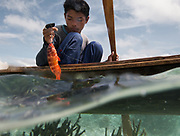 Colorful orange corral fish, caught off Mantabuan island.
