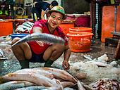 Wholesale Fish Market