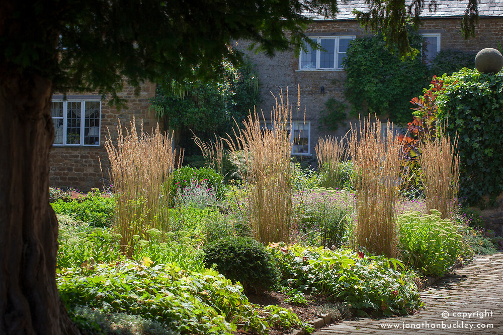 Calamagrostis × acutiflora 'Avalanche' in the borders at Pettifers - Feather reed grass