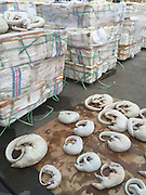 JIANGMEN, CHINA - OCTOBER 21: (CHINA OUT) <br /> <br /> Customs Seizes 2674 Smuggled Skinless Pangolin Bodies<br /> <br /> Picture shows the smuggled skinless pangolin bodies seized by customs on October 21, 2015 in Jiangmen, Guangdong Province of China. 2674 smuggled skinless pangolin bodies in 414 boxes were found by Jiangmen customs on September 14<br /> ©Exclusivepix Media