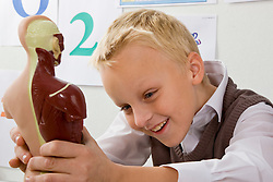 Smiling schoolboy inspecting an anatomical model