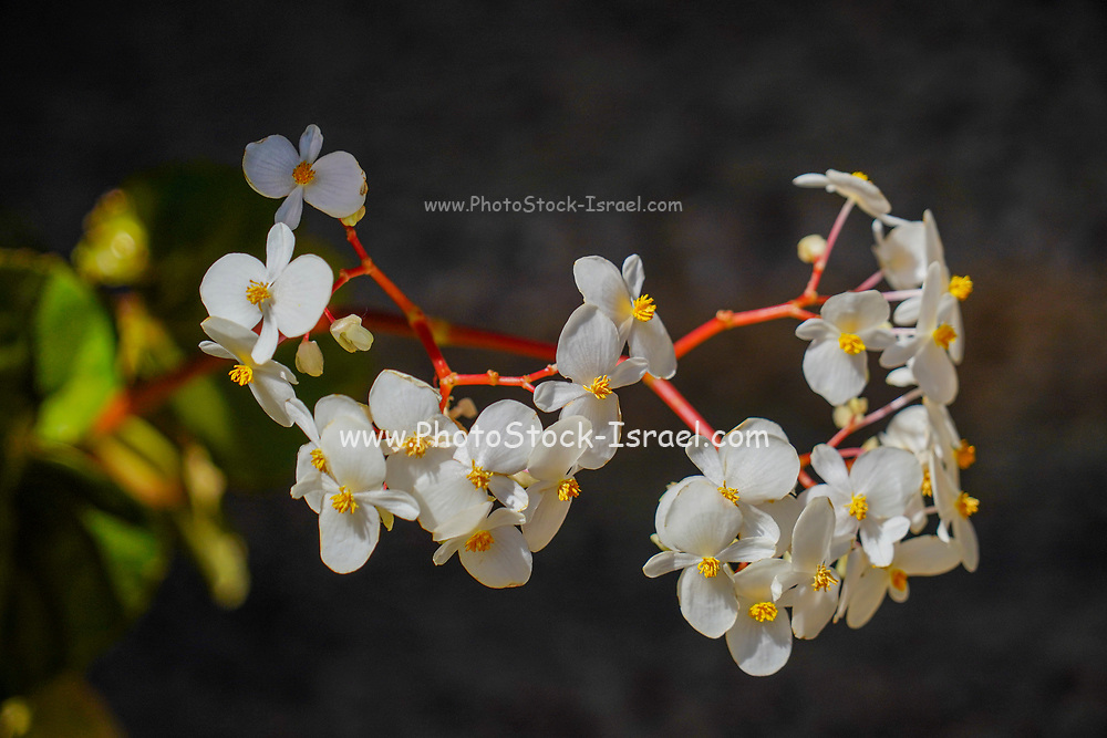 Selective focus of a White flowers growing on a stem