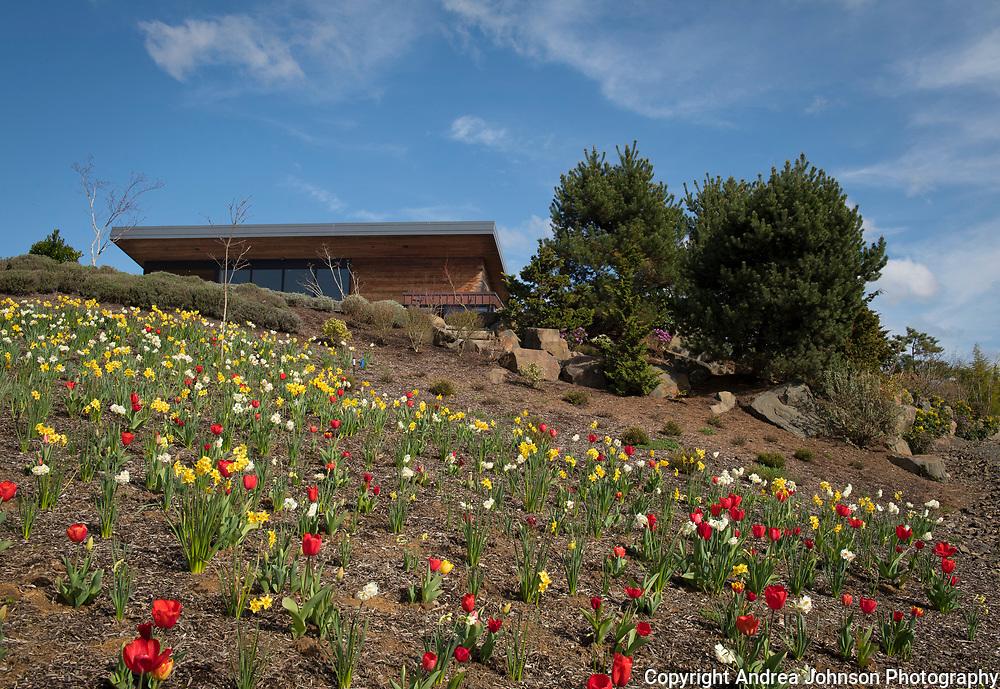 Spring at Saffron Fields Vineyard, Yamhill-Carlton AVA, Willamette Valley, Oregon