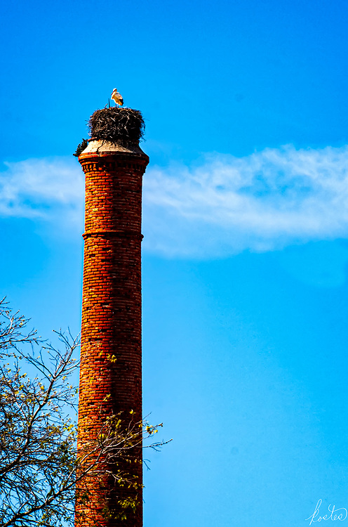 A white strork standing in it's nest, atop a tall chimney stack, in Tavira, Portugal