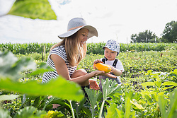 Mid adult woman with her baby harvesting courgette in community garden, Bavaria, Germany