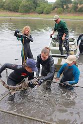 Melissa Miller & Team Bringing Leopard Shark From Pen For Photo ID