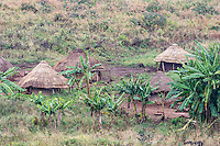 Informal Homestead surrounded by bannana trees on the foothills of Mount Gorongosa, Gorongosa Mountain, Inhambane Province, Mozambique