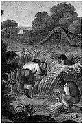 Reaping with sickles and binding the sheaves, England. Stipple engraving c1800