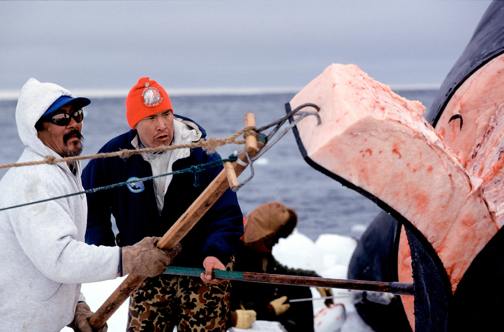 In Barrow Alaska,, whale meat is butchered after a successful hunt