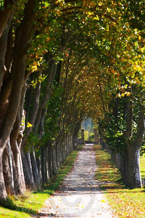 tree lined dirt drive way chateau guiraud sauternes bordeaux france