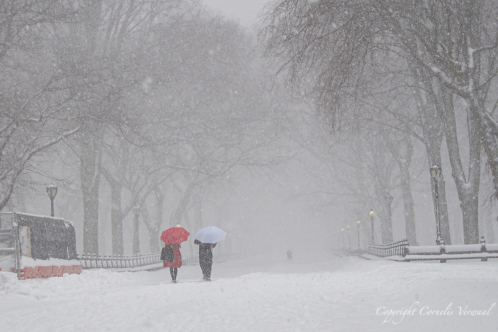 The Mall in Central Park, Feb. 1, 2021.