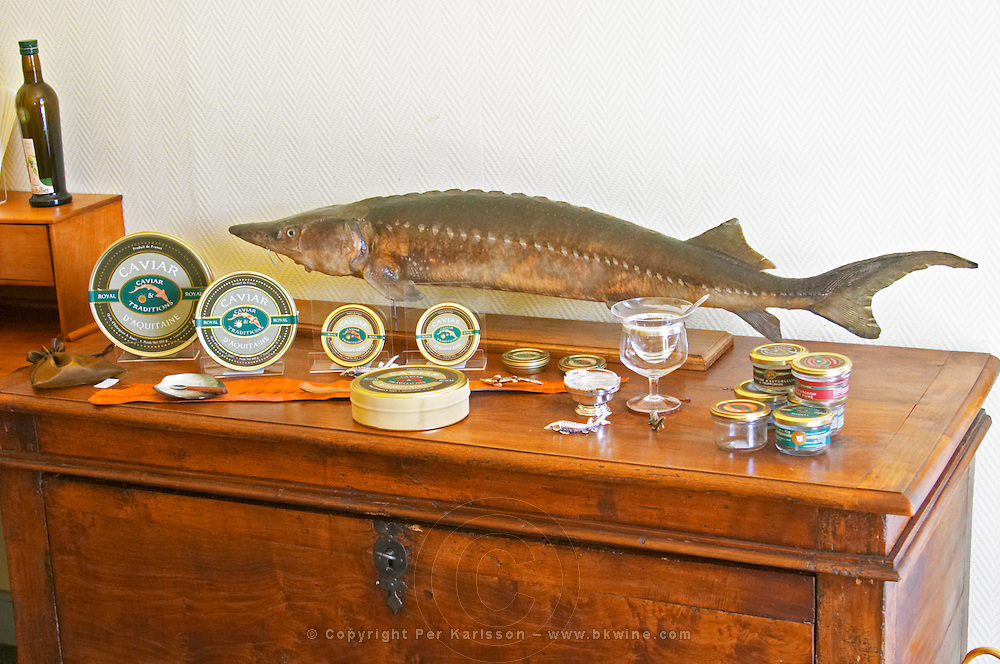 """A table with products from sturgeon and a stuffed fish: caviar, tins, glass jars with pate  """"Caviar et Prestige"""" Saint Sulpice et Cameyrac  Entre-deux-Mers  Bordeaux Gironde Aquitaine France - at Caviar et Prestige"""
