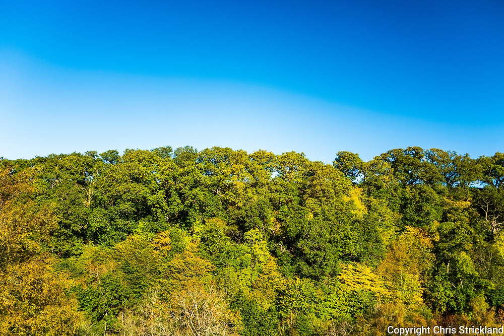 Camptown, Jedburgh, Scottish Borders, UK. 28th September 2018. Perfect blue skies and vibrant autumn colours at Dolphinston Farm in the Jed Valley, historically known as Jedforest.