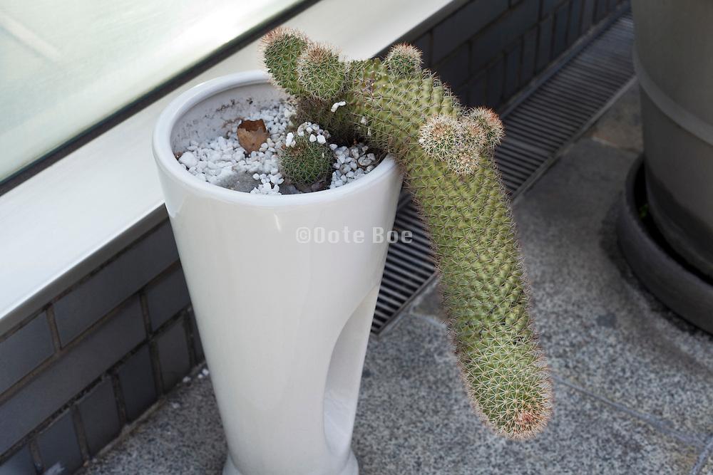 cactus plant hanging