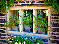 Stone Mullioned window on country house with pots of herbs