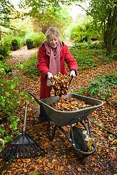 Carol Klein gathering leaves into a wheelbarrow in the woodland garden at Glebe Cottage