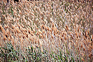 Tall grasses fill a dry river bed in Colorado. WATERMARKS WILL NOT APPEAR ON PRINTS OR LICENSED IMAGES.