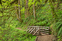 Bridge on Butte Creek Trail Oregon