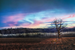 A winter sunset falls in wispy clouds of blue and cotton candy pinks over a tree in an isolated field as a doe poses for the shot.
