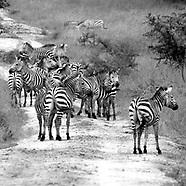 Uganda Safari Images 2018